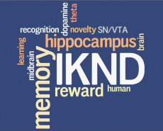 IKND wordle 1
